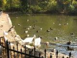 Góra parkowa - październik 2010 - wstęp
